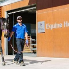 Horse and person in front of Equine Hospital
