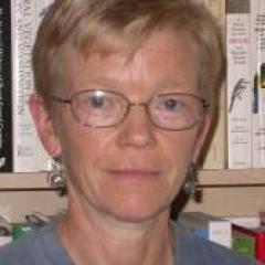 Dr Helle Bielefeldt-Ohmann